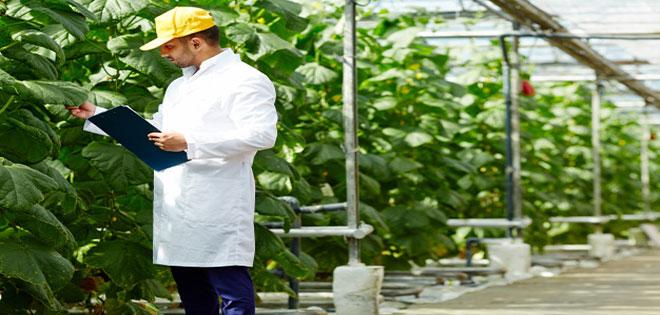 بازار کار رشته مهندس کشاورزی - آینده شغلی